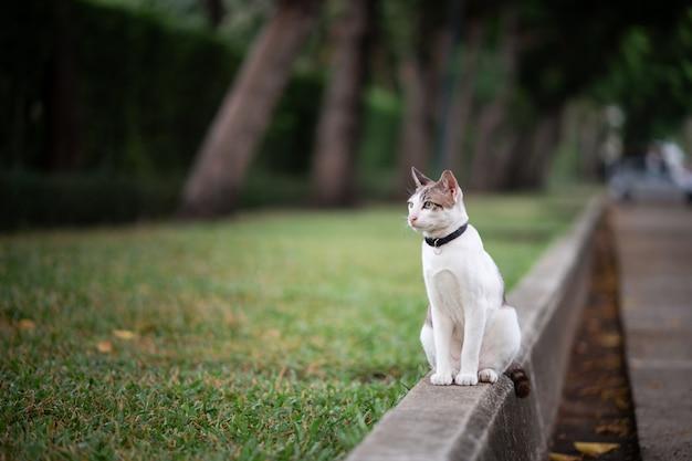 Белый с коричневой полосой кот стоит на дороге в саду.