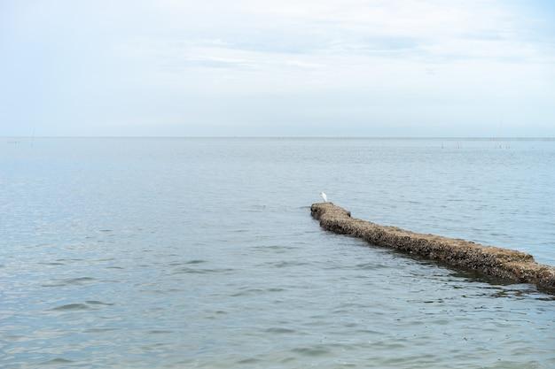 海の水は澄んでいてきれいです。海岸に打ち寄せる表面の波。ビーチでもっと岩。鳥は石の上に立っています。