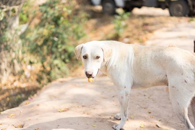 庭で乾いた食べ物を食べる犬