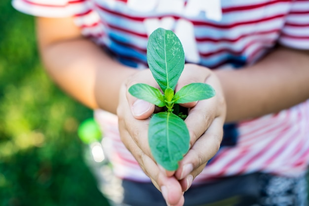 Рука ребенка держать деревья в концепции окружающей среды