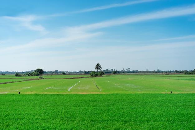 青い空と田んぼ。美しい自然