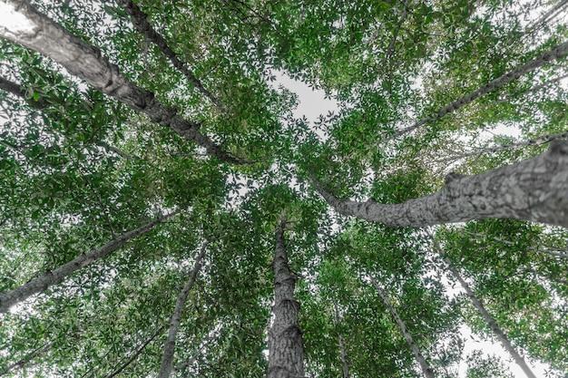 自然の日光と森の木