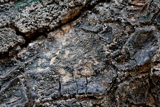 樹皮のテクスチャーのマクロ撮影写真