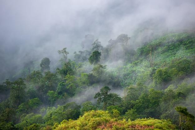 山の中の霧