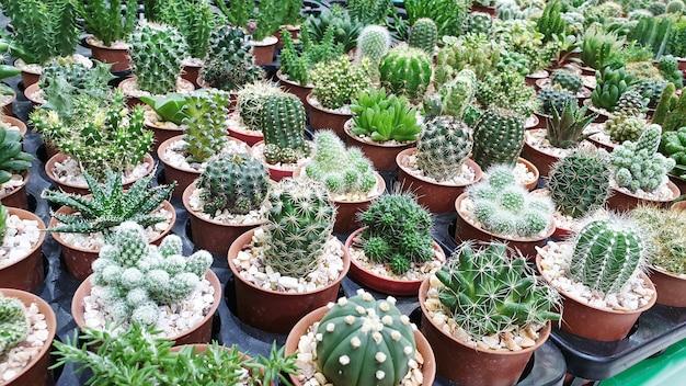 Смешанный из кактусов и суккулентов