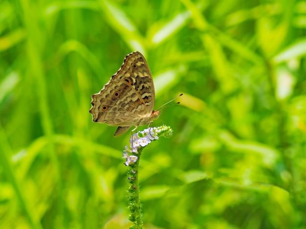 マクロとクローズアップ花に小さな蝶。