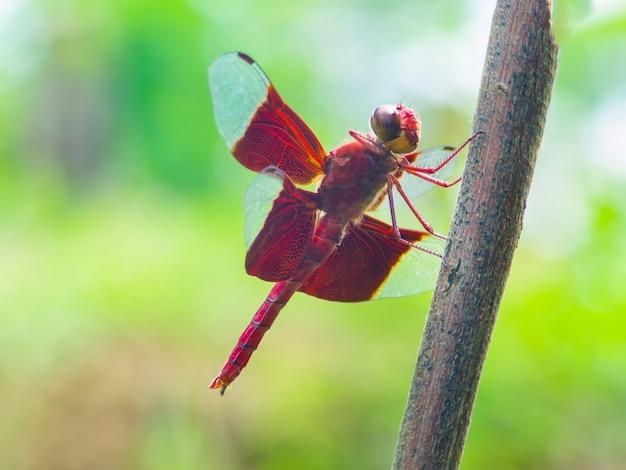 枝に美しい赤いトンボ