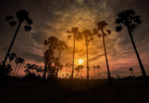 カラフルな空と初期の美しい夜明けの間にフィールドのヤシの木