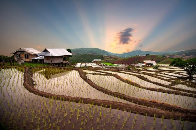 タイ北部のチェンマイタイのバンメークランルアン棚田。タイのチョムトーン地区の田んぼ。