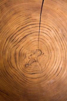 木製の大きな円形部分の断面の背景