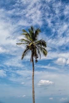 Пляж негомбо на шри-ланке