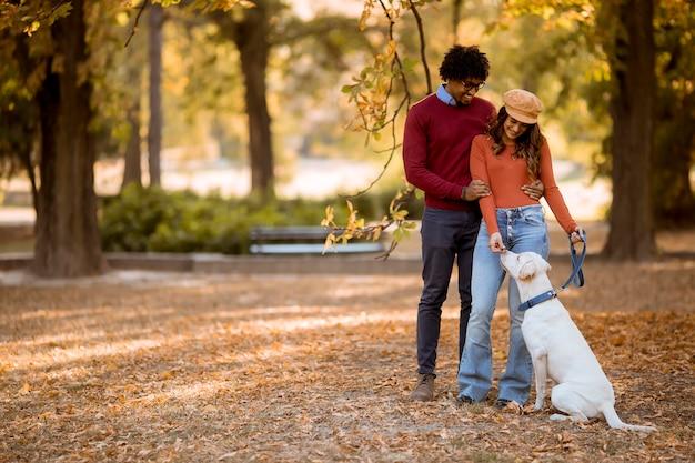秋の公園で犬を連れて歩いて多民族のカップル