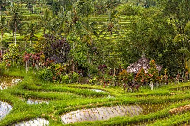 バリ島南東部のジャティルウィの田んぼ