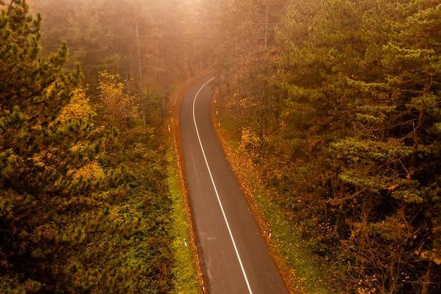 Аэрофотоснимок густого леса осенью с прорезать дорогу