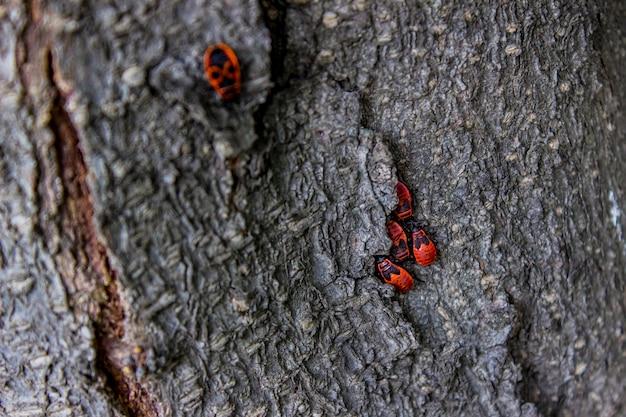 Клопы на коре дерева