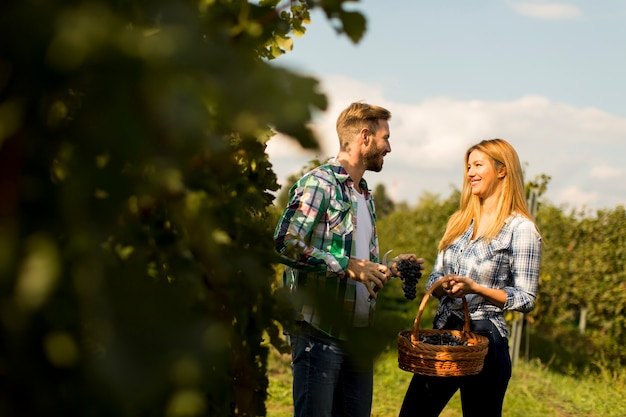 Пара в винограднике