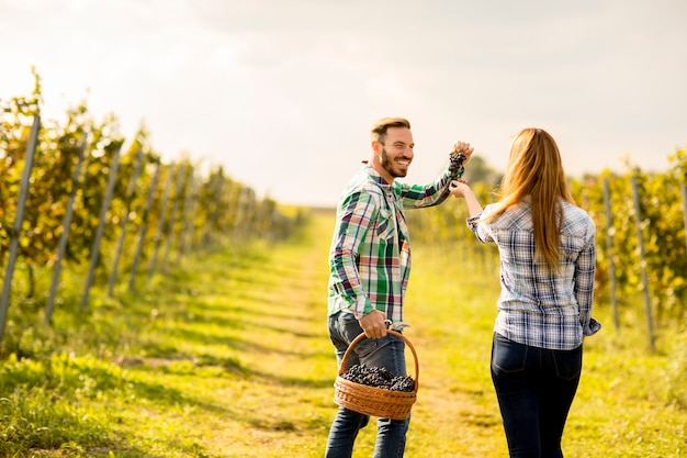 Мужчина и женщина-фермеры собирают виноград в винограднике