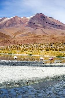 ボリビアのラグーナカラーダ