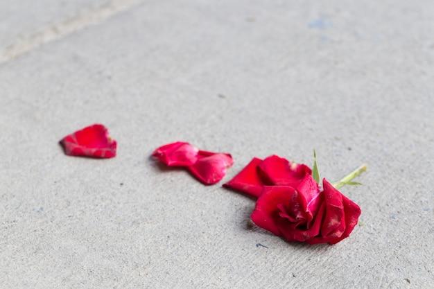 Роза на полу