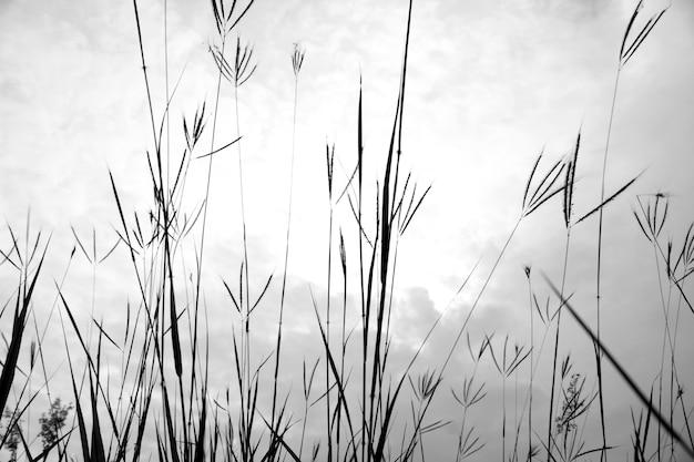 フィールドの草。