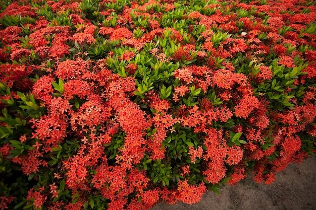 Красные цветы.