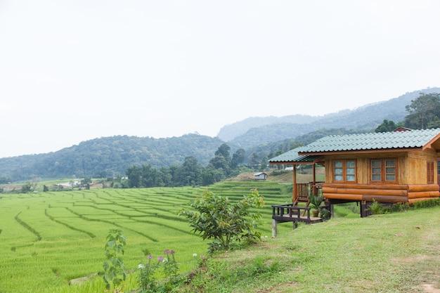 Домашние прилегающие рисовые поля