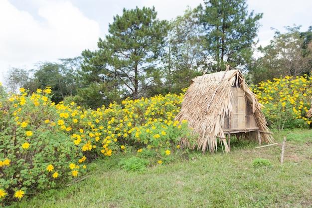 芝生の上の小屋