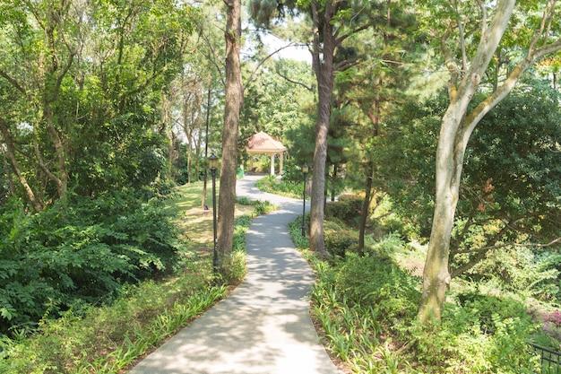 公園の歩道。