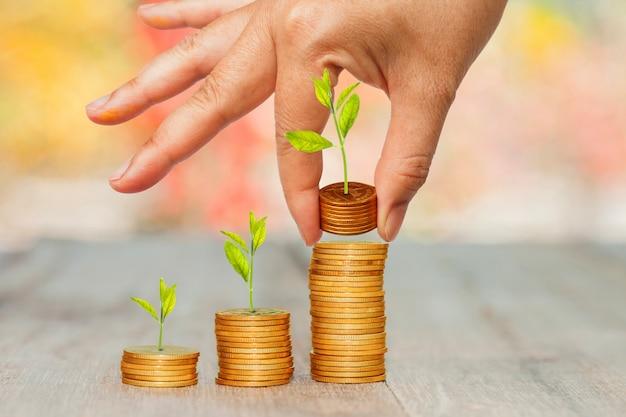 背景のボケ味を手に積み重ねたコインで小さな植物を育てます。