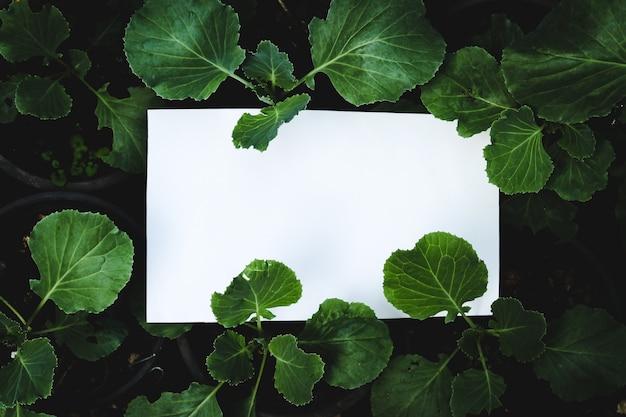 緑の植物の背景、広告の概念に関するホワイトペーパーカード。