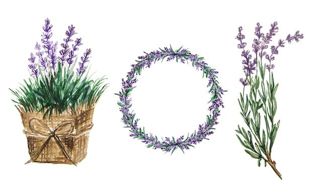 Набор акварели лаванды. нежные цветы лаванды