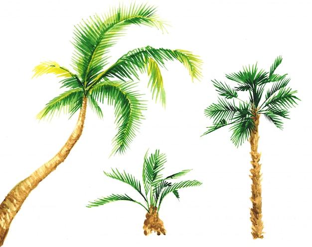 Набор акварели пальмы.