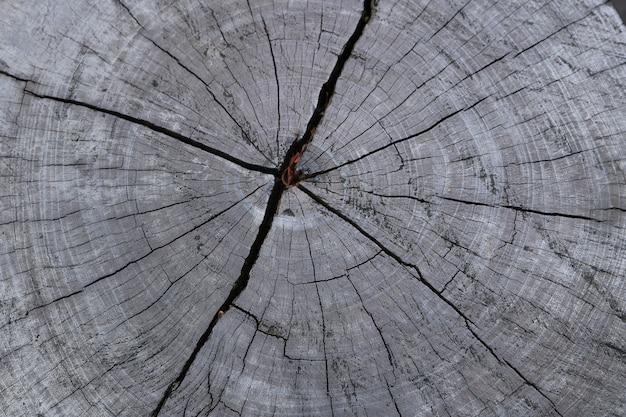 木の切り株のテクスチャ背景を閉じる