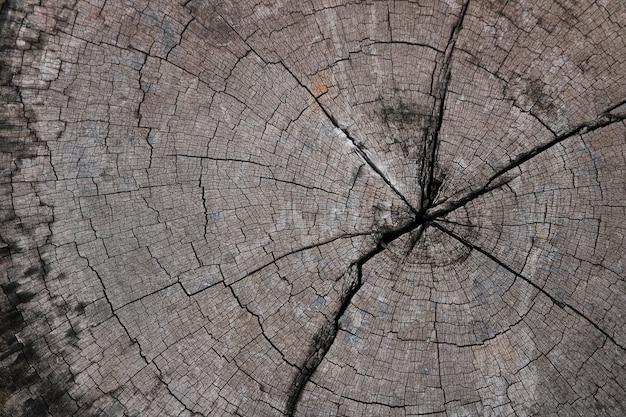 木の切り株の背景