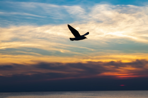 海の鳥が飛んで