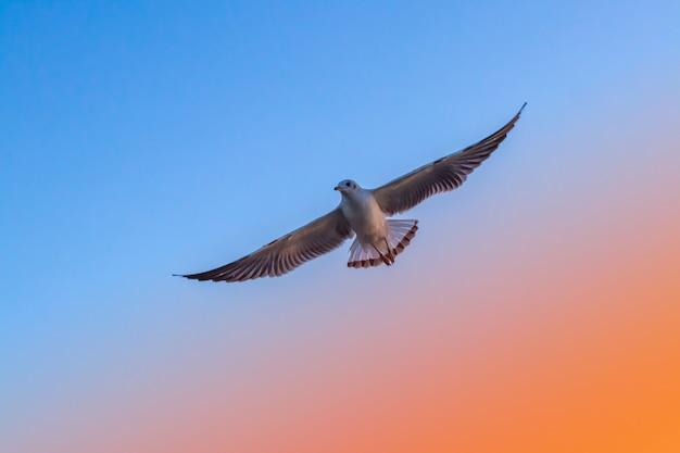 海の鳥が空に自由を飛んで
