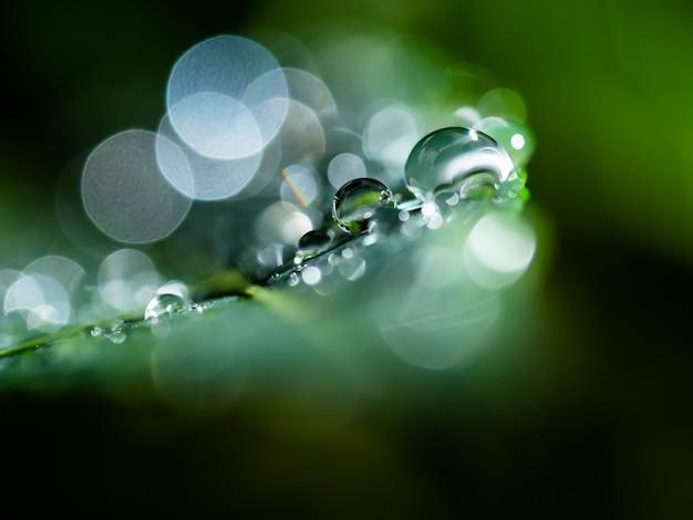 緑の葉の上の雨の雫