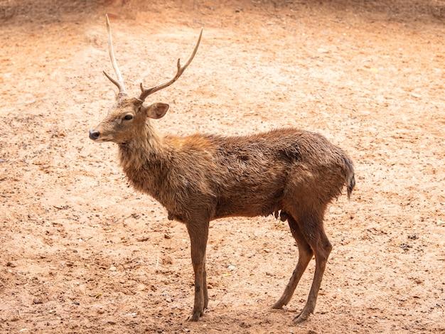 鹿は美しい動物です