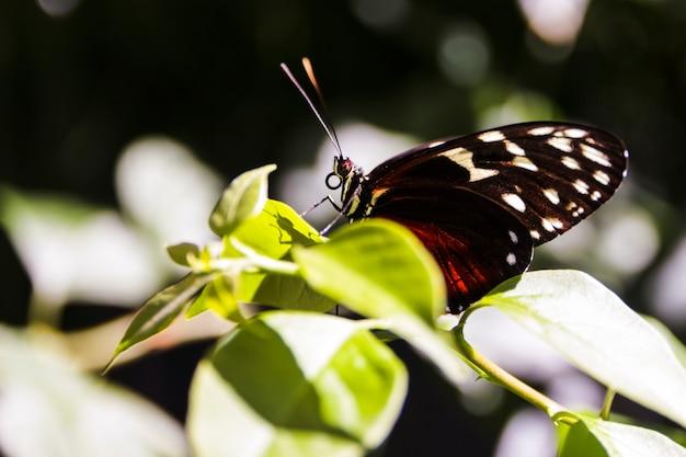 かわいい蝶が庭の緑の葉に乗っています