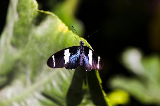 きれいな蝶、庭の緑の葉の上に腰掛けて