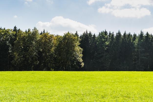 森の横にある緑の牧草地