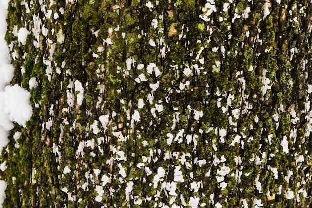 大まかな木の樹皮のテクスチャー
