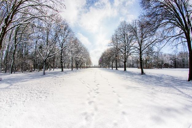 森の中のいくつかの木に雪道