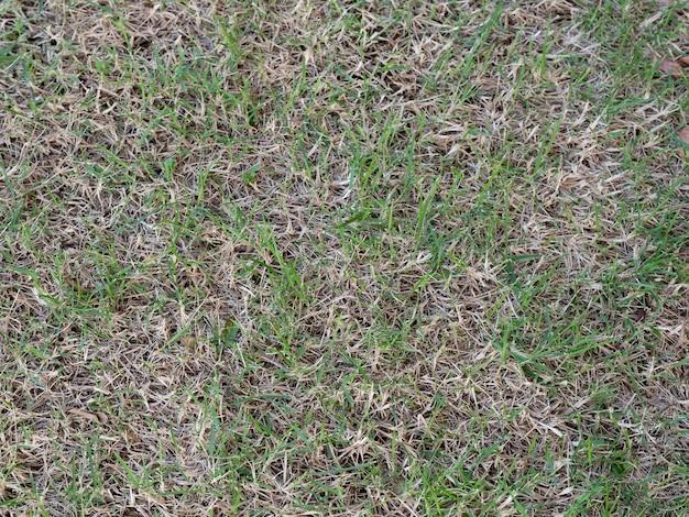 緑の芝生の被害