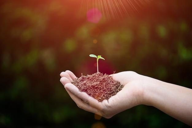 背景に土壌の赤ちゃんの木のトップビュー。地球の日のコンセプト