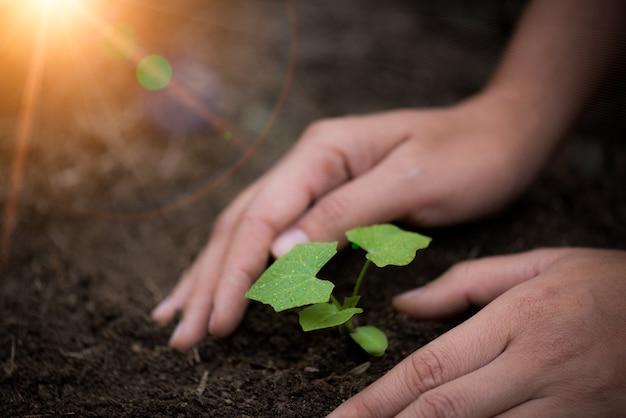 背景に土壌の若い木のトップビュー。地球の日のコンセプト。