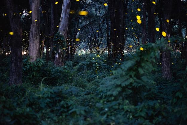 夜の森で飛ぶホタルの抽象的で魔法のイメージ