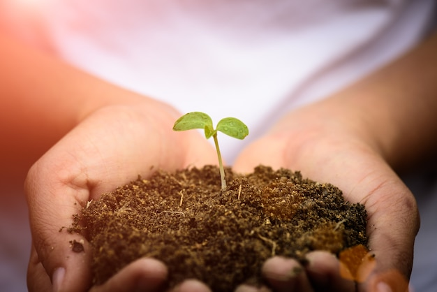 女性の手は、背景の土壌で若い赤ちゃんツリーを保持しています。
