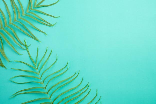 明るいパステルグリーンの背景、シダの葉に熱帯の夏の上から見る