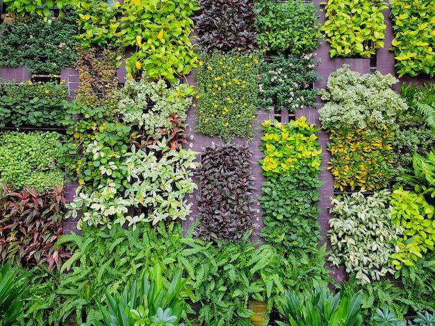 植物の壁、自然の緑。自然の壁。